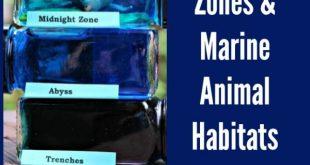 Science Activity for Kids: Ocean Zones & Animal Habitats